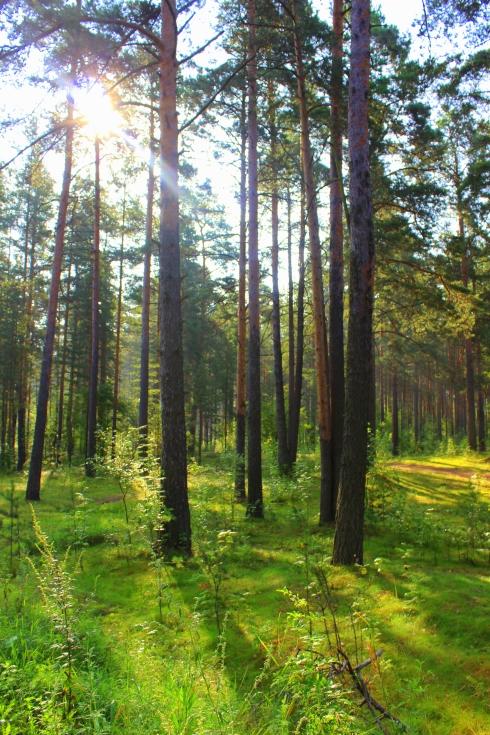 La forêt qui entoure l'usine