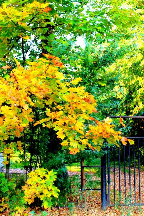 Des magnifiques couleurs d'automne à Luga